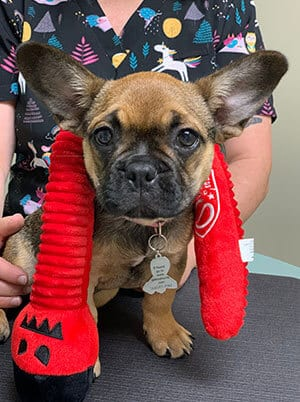 Veterinarian with a Teething Puppy in White Bear Lake, MN